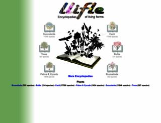 llifle.com screenshot