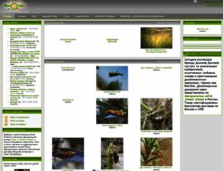 macroclub.ru screenshot
