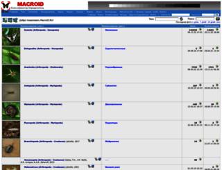 macroid.ru screenshot
