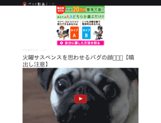 pet-video.co screenshot
