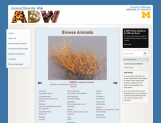 animaldiversity.ummz.umich.edu screenshot