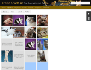 british-shorthair-cat.pictures-of-cats.org screenshot