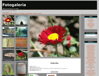 efotogaleria.pl screenshot