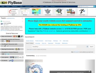 flybase.org screenshot