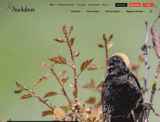 getintobirds.audubon.org screenshot