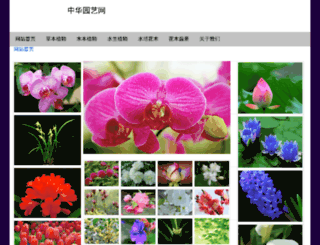 hxhuahui.com screenshot