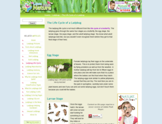 ladybug-life-cycle.com screenshot