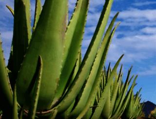 mannatech.co.jp screenshot
