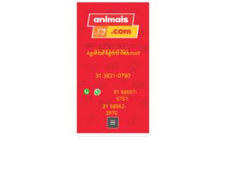 petshopanimais.com screenshot