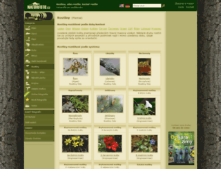 rostliny.naturfoto.cz screenshot