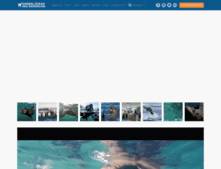 sealsnorkeling.com screenshot