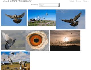 shetlandpigeons.com screenshot