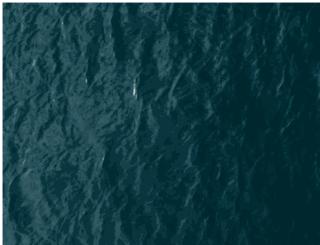 spiritedsloth.com screenshot