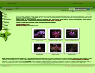 storczyki.pl screenshot