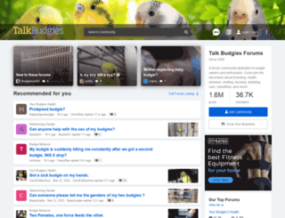 talkbudgies.com screenshot