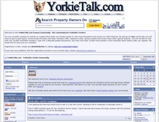 yorkietalk.com screenshot
