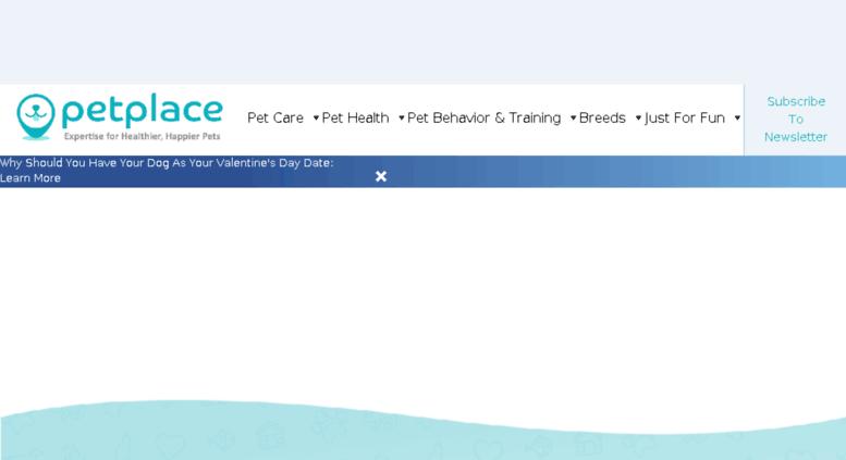 Access cdn petplace com  The Web's #1 Source of Pet