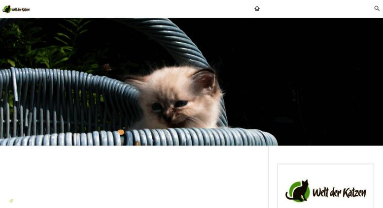 sehen von katzen