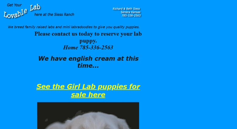 Access Lovablelabcom Akc Yellow Lab Puppies For Sale White Labs